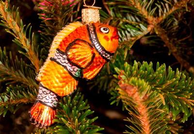 Teaching Fish to Climb Trees